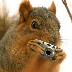 Yoda the squirrel with camera