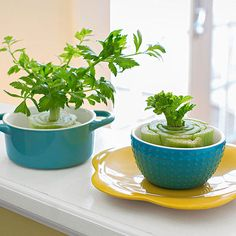 Get growing! Kids will love watching kitchen scraps transform into a windowsill #garden (via @FamilyFun magazine).