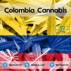 Medical marijuana from Colombia will see 2018 as a 'bellweather year,' writes Matt Lamers in MjBizDaily.
