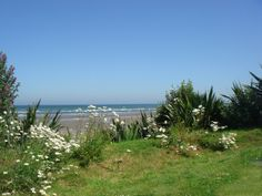 The beach garden.Keeping the balance between 'Gardens' and 'Nature' is one of the joys of organic gardening.