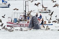California, ospite a sorpresa: nella baia spunta la balena