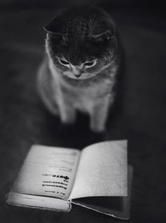 This photo is amazing the shading and the aesthetic. it looks like a picture from another era! #pets #book