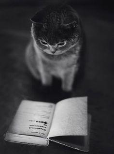 Des chats et des livres