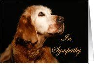 Sympathy Pet Loss - Golden Retriever Card by Greeting Card Universe. $3.00. 5 x 7 inch premium quality folded paper greeting card. Animals / Pets cards & photo Animals / Pets cards from Greeting Card Universe will bring a smile to your loved ones' face. A picture is worth a thousand words, so why not send a photo Animals / Pets card this year? Allow Greeting Card Universe to handle all your Animals / Pets card needs this year. This paper card includes the following themes:...