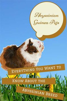 Paper Cat Litter For Guinea Pigs