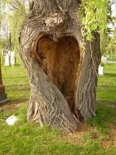 Heart-shaped hole in a tree. Looks like a tree we took photo's in front of at our wedding at a resort in Negril Jamaica. I Love Heart, Happy Heart, Heart Pics, Photo Heart, Heart In Nature, Heart Tree, Unique Trees, Tree Art, Tree Of Life