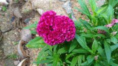 My native flowers 2