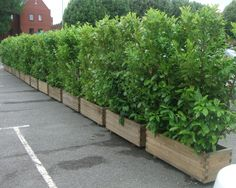 Screening plants in planters to contain growth, concrete up to the deck and put pots on top