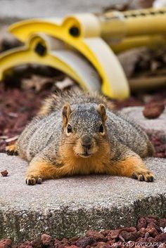 Squirrelyyy.