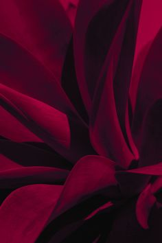 this isn't happiness. — Crimson and clover, Xuebing DU Black Background Wallpaper, Red Background, Burgundy Aesthetic, Color Borgoña, Rose Flower Wallpaper, Beautiful Flowers Wallpapers, Rainbow Aesthetic, Painted Books, Burgundy Color