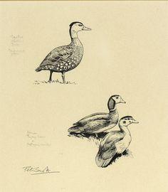 Wildlife Paintings, Wildlife Art, Royal Navy, Art Forms, Pastels, Galleries, Butterflies, Coast, Old Things