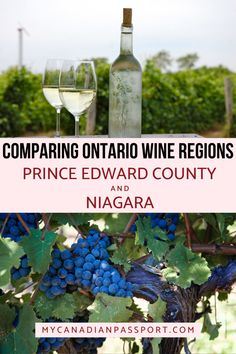 Learn all about the differences between Niagara and Prince Edward County before booking your Ontario wine region getaway. #princeedwardcounty #ontariowine #visitpec #niagarawinery Canadian Passport, Canadian Travel, Ontario Travel, Niagara Region, Yoho National Park, Drinking Around The World, Visit Canada, Newfoundland And Labrador, Prince Edward