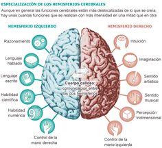 The power of our brain! Brain Memory, Brain Anatomy, Medical Anatomy, Human Anatomy, Brain And Heart, Ap Spanish, Learn Spanish, Interesting Topics, Study Hard