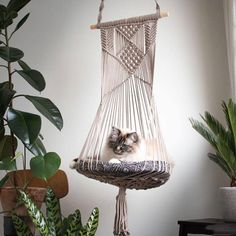 Cat Hammocks Cat Planter on Etsy See our or tags -Macrame Cat Hammocks Cat Planter on Etsy See our or tags - Katze Hängematte CAT PLANTER / Beige 2 Makramee Cat Swing Chat Beige, Big Pillows, Puppy Beds, Cat Hammock, Cat Room, Pet Furniture, Furniture Removal, Furniture Online, Luxury Furniture