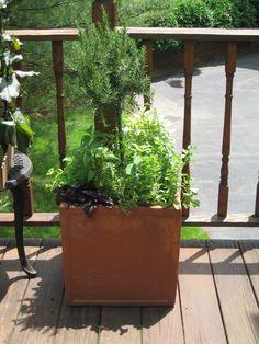 Container Garden: kitchen herb garden | jardin d'herbes aromatiques