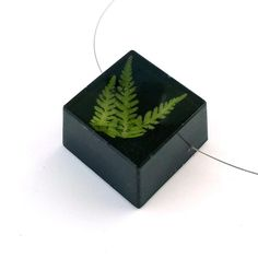 READY TO SHIP Green Ferns set into Black by SpottedDogAsheville, $49.00