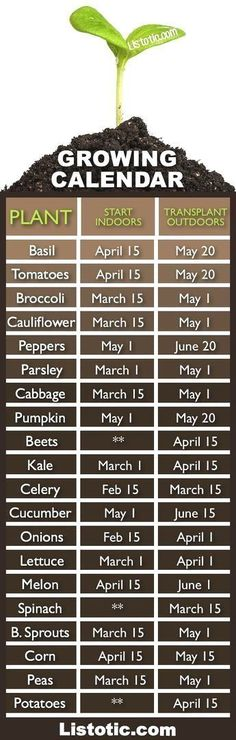 When to plant your vegetable garden.... When to plant what? (when to start seeds indoors and when to transplant them outdoors). Time to get started!  #LandscapingDIY