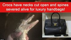 Hermes: Stop making handbags out of crocodile skin! | YouSignAnimals.org