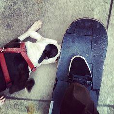 Everyday this guy attacks my board / #dogbite - @lowcardmag - #instagram