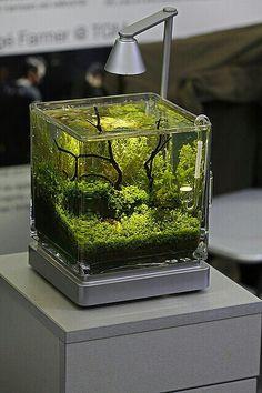 betta forward aquascaped tank showing off a betta this is proper betta ...