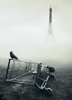 Paris, France - Spooky but amazing photograph of the French capitol. Michael Rajkovic is the author of this master piece. Please share what you think about this shot. #Photograph #Paris #Bird #Fog