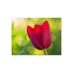 Blumenbild auf Leinwand, als Kunstdruck oder Fototapete  Heiße Liebe