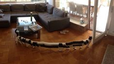 I took a panoramic picture of our living room. But my cat decided to walk through. - Imgur