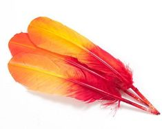 Fire Hombre Quill Feathers by the Pound.