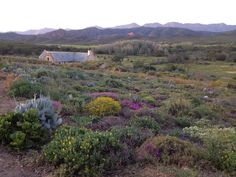 Little Karoo spring colours, near Calitzdorp, Western Cape, South Africa Most Beautiful Cities, Beautiful World, Simply Beautiful, South Afrika, Smell Of Rain, Big Sky Country, Live, Trees To Plant, Beautiful Landscapes