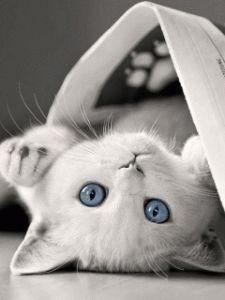 So cute love love love this blue eye kittie
