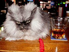 17 redenen waarom katten badass motherf#ckers zijn | WTF.nl - Blijf je verbazen