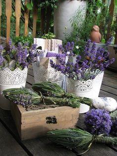 ॡॡ Lavender and Lace ॡॡ Lavender Decor, Lavender Cottage, Lavender Garden, French Lavender, Lavender Scent, Lavender Blue, Lavender Fields, Lavender Flowers, Love Flowers
