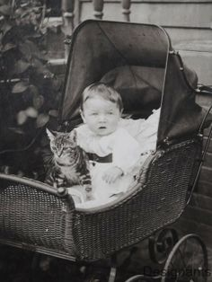 baby and cat in a carriage