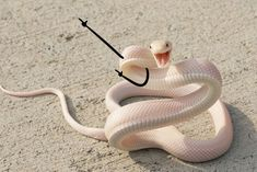 68 Of Today's Freshest Pics And Memes Orochimaru Wallpapers, Animal Pictures, Funny Pictures, Memes Lindos, Pretty Snakes, Cute Reptiles, Cute Snake, Animal Jokes, Cute Memes