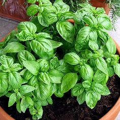9 Food Cures You Can Grow at Home gardening-landscape