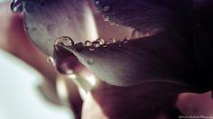Drops of water by Sebastian Lacherski on 500px