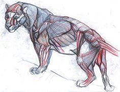 "Concept Design Academy: ""Animal Anatomy"" with Joe Weatherly~!!"