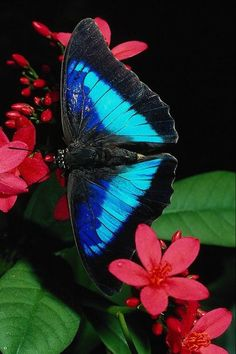 Butterflies remind us that no matter how ugly the world around us gets there is still beauty to be found.