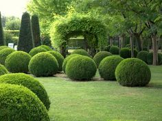 Topiary The garden at Le Vieux Logis in the Dordogne, France. These Buxus spheres are so… - Boxwood Garden, Topiary Garden, Topiaries, Boxwood Hedge, Boxwood Topiary, Potager Garden, Topiary Trees, Formal Gardens, Outdoor Gardens