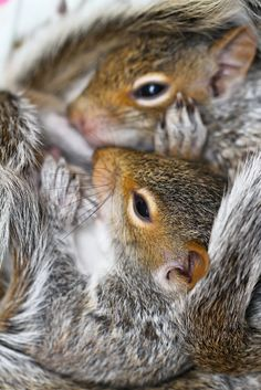 Squirrel attacks old couple sexual health