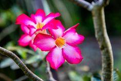 Barbados Hidden Beach, Barbados, Rum, Caribbean, Easter, The Incredibles, Flowers, Plants, Easter Activities