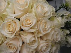 Vendela roses... with Champagne colored ribbon? Ivory Roses, Cream Roses, White Roses, White Flowers, Beautiful Flowers, List Of Flowers, Types Of Flowers, Rose Wedding Bouquet, Gardens