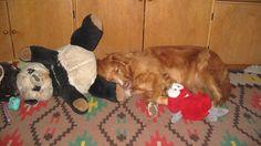 150126 (sleeping with Panda, Bean, etc)