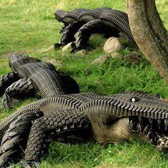 #Recycle Tires into Alligators for your lawn. #Recycling is important on so many levels. Choose products with packaging that can be recycled. Creates over a million jobs for USA. Billions of tons of plastic go into oceans daily. If want to help listen to whole interview with man that discovered Pacific Garbage Patch: https://www.youtube.com/watch?v=sSpqQ5uced4 More things to recycle: http://www.smarthealthtalk.com/recycled-products.html