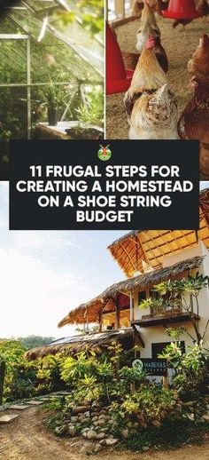 11 Frugal Steps for Creating a Homestead on a Shoe String Budget