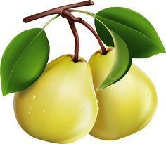 What kind of fruit do you eat in autumn? Eating more fruits usually allows us to get more vitamins and nutritional value, but the nutritional value and attributes of each fruit are different. So what kind of fruit do you eat in autumn? Photoshop World, Free Photoshop, Natural Cures For Hypothyroidism, Decoupage, Garden Labels, Food Clipart, Kinds Of Fruits, Fruit Illustration, Fruit Art