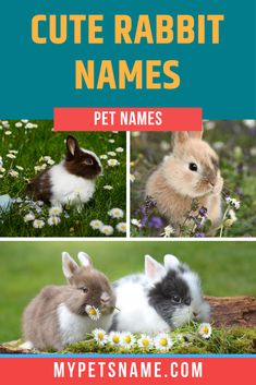 Rabbits are some of the most adorable pets that you could keep, and finding a cute name for them is important! Pet bunnies can be potty trained and taught to respond to cute Rabbit names, which makes them the perfect pet.  #rabbitnames #cuterabbitnames #bunnynames Boy Rabbit Names, Bunny Names, Cute Pet Names, Funny Rabbit, Judy Hopps, Types Of Flowers, Cute Bunny, Jack Frost, Rabbits