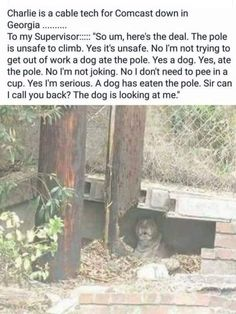 I think he wants a new chew toy - Funny, Humor, LOL, Pics Animal Memes, Funny Animals, Cute Animals, Pretty Animals, Funny Cute, The Funny, Daily Funny, Funny Dogs, Funny Memes