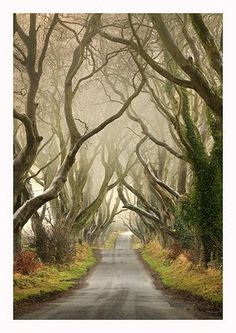 The Dark Hedges of Northern Ireland (click through for more pics)