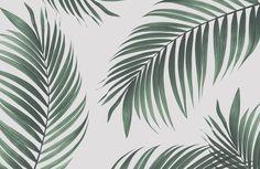 tropical-palm-wall-mural-plain